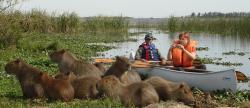 Im Ibera erleben sie die Wildtiere hautnah2