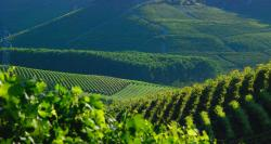 Langhe Weinlandschaft