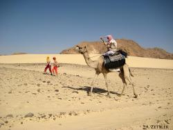 Zu Fuss oder auf dem Kamel