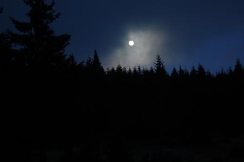 Nachtwanderung bei Vollmond