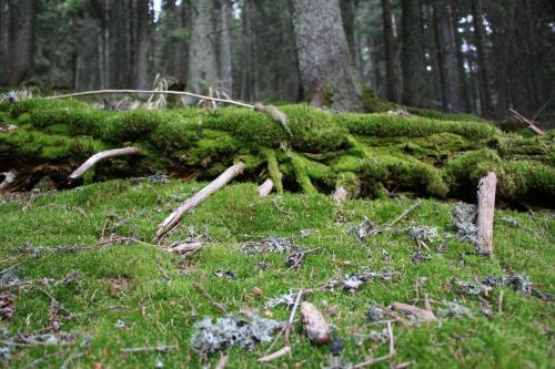 Alt- und Totholz prägen diese Waldwildnis