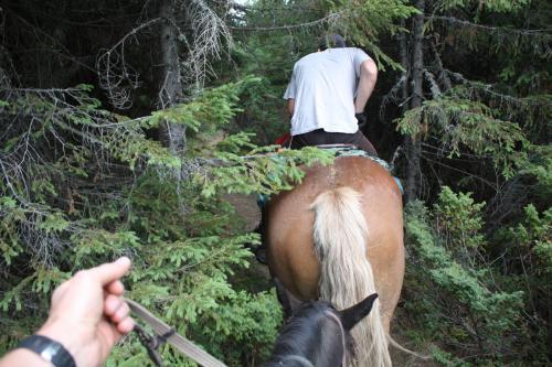 Erkundung per Pferd