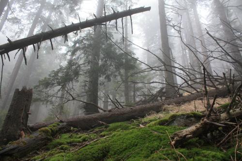 Experience Wilderness Ostkarpaten, Rumänien