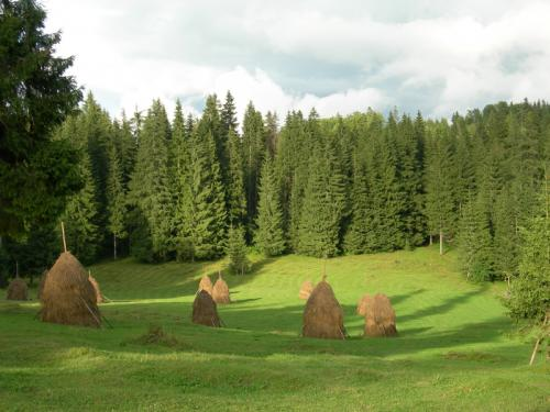 Landscape in Apuseni Mountains