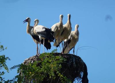 Storks  Mila23