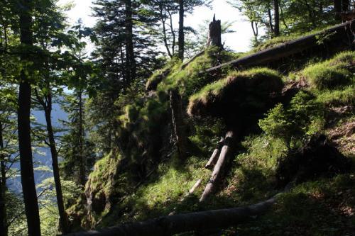 Wildniswanderung über Stock und Stein...