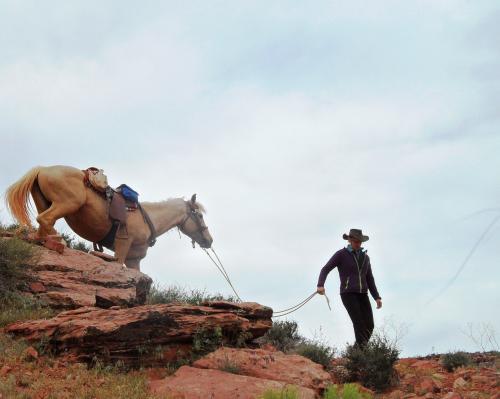 die Pferde müssen ab und zu geführt werden