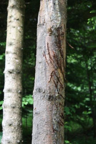 Croatia - Experience Wilderness Risnjak NP - Bärenkrallen