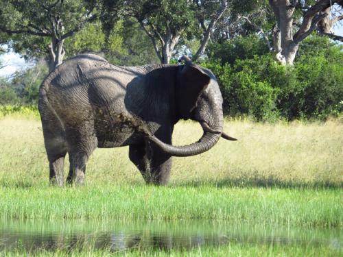 Elefant im Ruaha