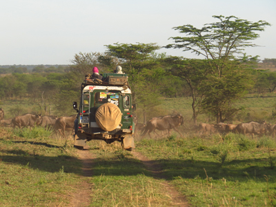 Gnumigration, Serengeti