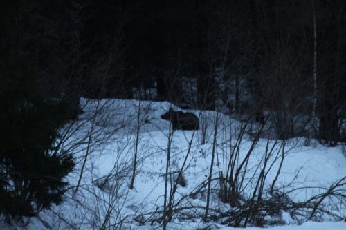 Wir haben extremes Glück: Da ist ein Bär! (Foto: Wojciech Juda)