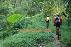 Trail im Regenwald