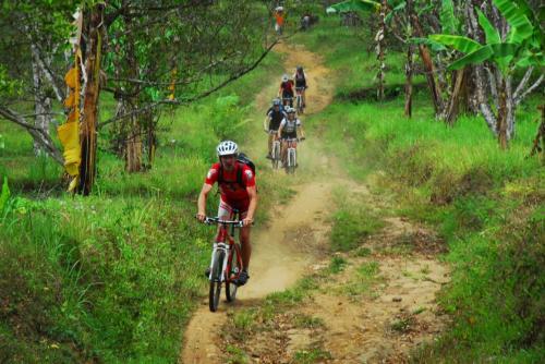 leichter Trail durch Gewürznelkenplantagen