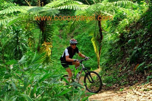 Trail im Regenwald der Insel Java