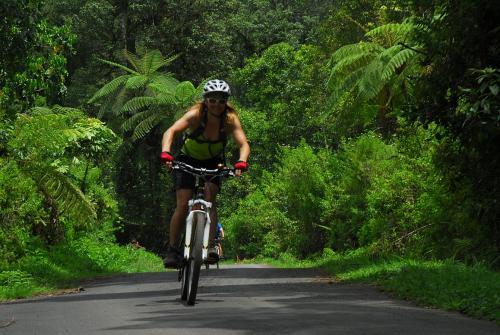 Regenwaldabfahrt